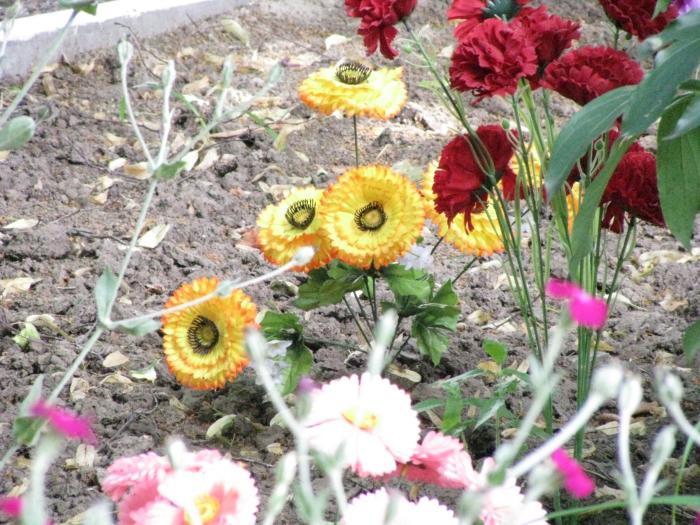 Квіти меморіал трагедія хутір Буда