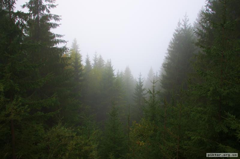 Дерева в тумані