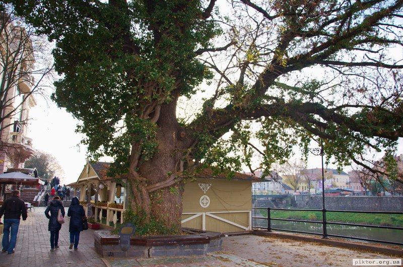 Дерево обплетене