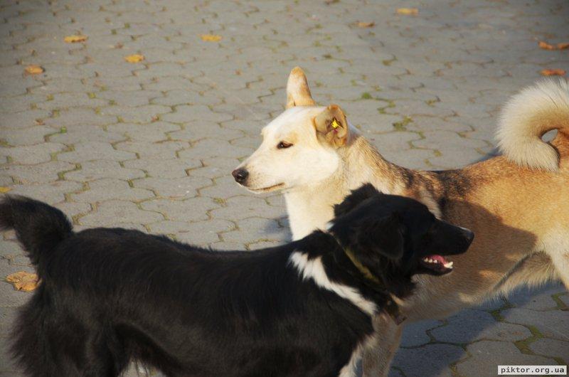 Стерилізовані собаки