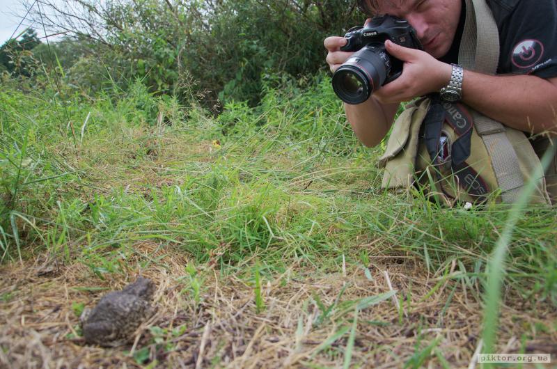 Фотографування ропухи