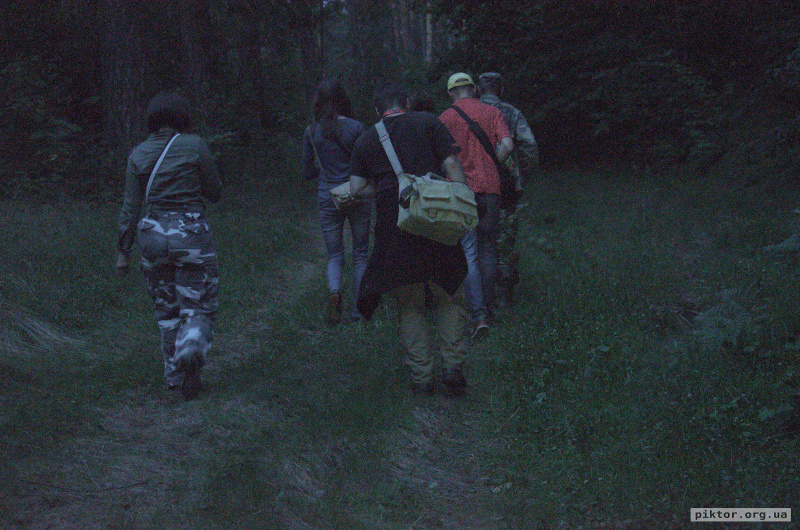 Прогулянка лісом увечері