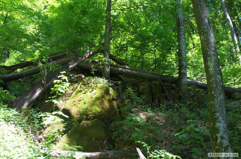 Поламаний ліс
