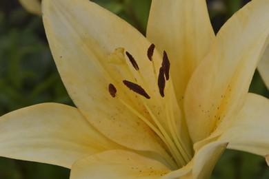 Зразок фотографії на Nikon D5500
