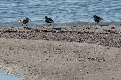 Фото з птахами
