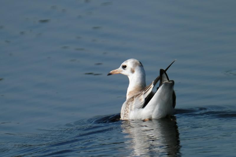 Пташка на воді