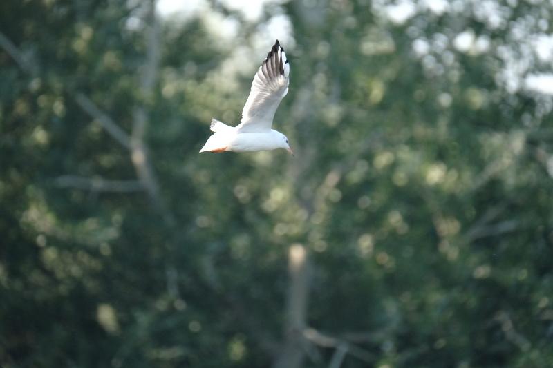 Швидка пташка