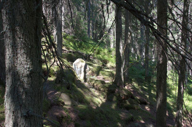 Ліс на схилі