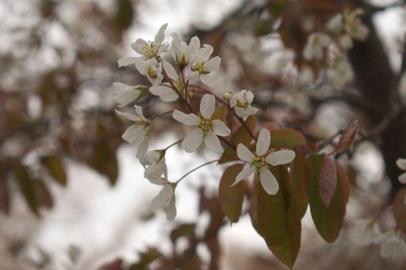 Квіточки