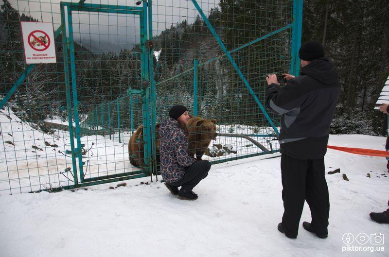 Фото з ведмедями