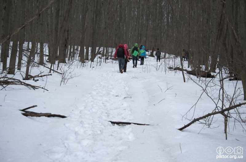 Сніг в лісі